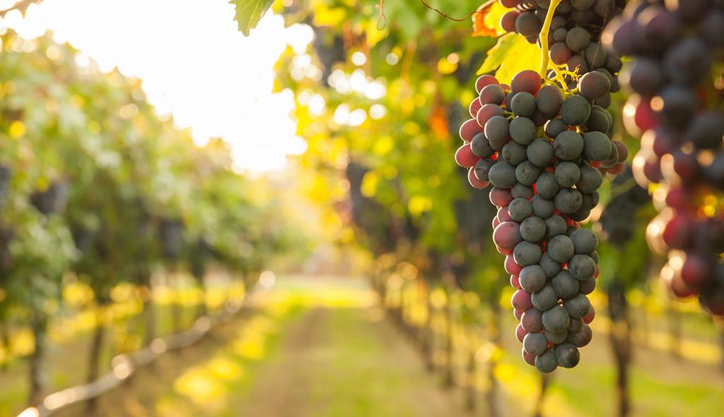 Il Vino della Serra